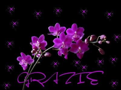 orchidGRAZIE