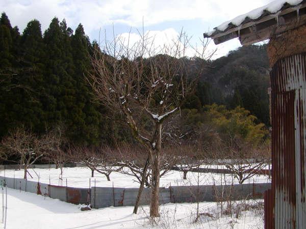 雪の中寂しく立つ木