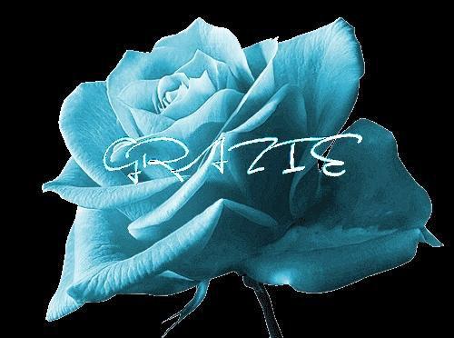 grazie rosa azzurra